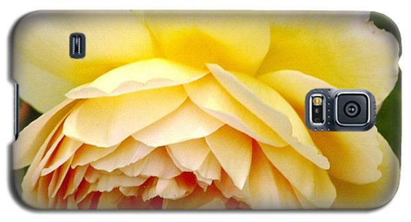 David Austin Rose Golden Celebration 2 Galaxy S5 Case by Rod Ismay