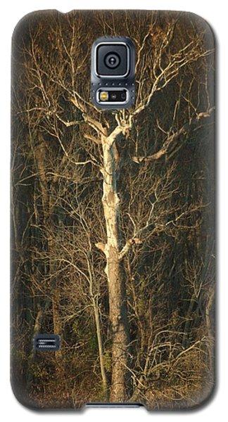 Day Break Tree Galaxy S5 Case