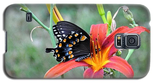 Daylily Delight 2 Galaxy S5 Case by Jan Amiss Photography