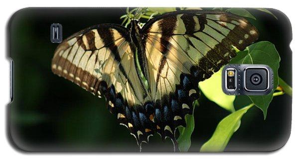 Dayspring Galaxy S5 Case