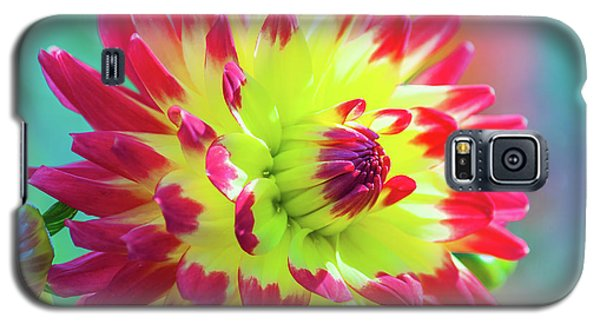 Dazzling Dahlia Flower Galaxy S5 Case
