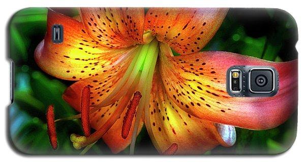 Dazzling Daylily  Galaxy S5 Case