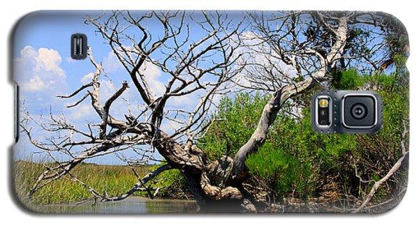 Dead Cedar Tree In Waccasassa Preserve Galaxy S5 Case
