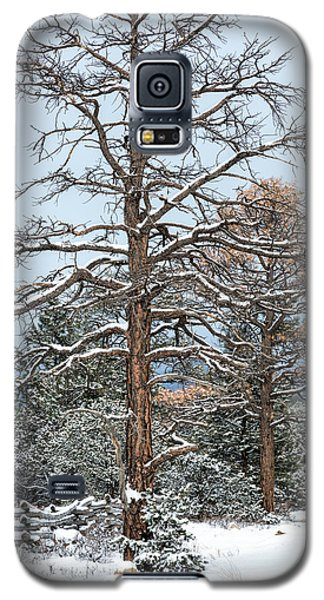 Dead Ponderosa Pines In Winter Galaxy S5 Case