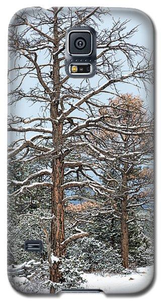 Dead Ponderosa Pines In Winter Galaxy S5 Case