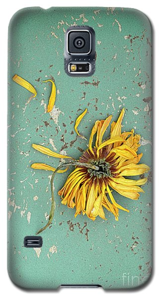Galaxy S5 Case featuring the photograph Dead Suflower by Jill Battaglia