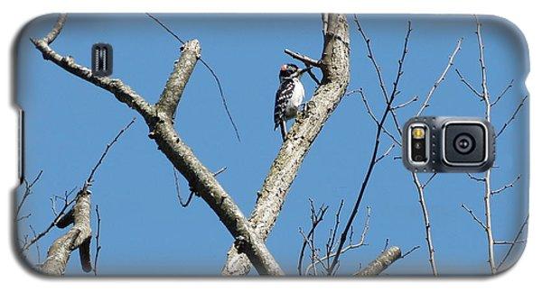 Dead Tree - Wildlife Galaxy S5 Case by Donald C Morgan