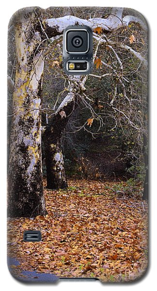 Galaxy S5 Case featuring the photograph December In California by Viktor Savchenko