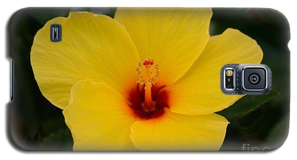 Decorative Floral Photo A9416 Galaxy S5 Case