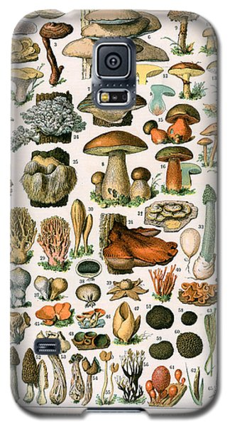 Decorative Print Of Champignons By Demoulin Galaxy S5 Case by American School