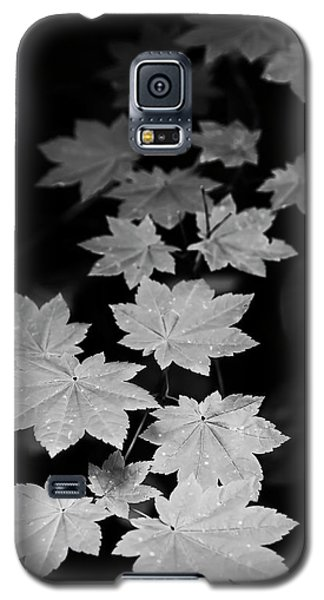 Deep Forest Maple Galaxy S5 Case