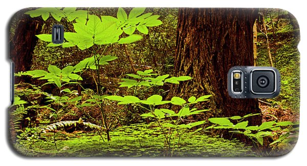 Deep In The Forest-lime Klin Galaxy S5 Case