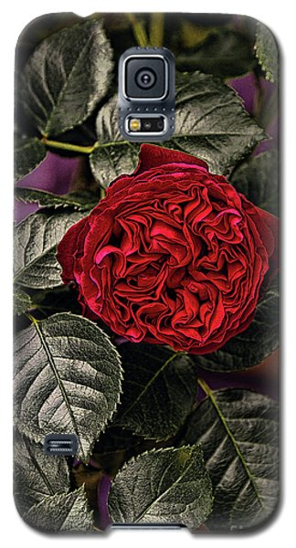 Deep Red Rose Galaxy S5 Case