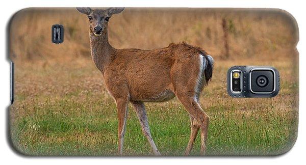 Deer At Sunset Galaxy S5 Case