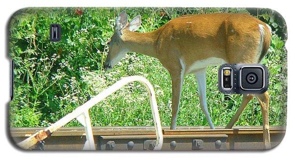 Deer Crossing Galaxy S5 Case by J R Seymour
