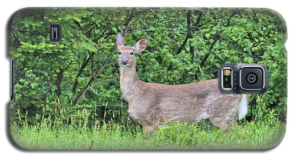 Galaxy S5 Case featuring the photograph Deer by Debbie Stahre
