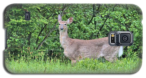 Deer Galaxy S5 Case by Debbie Stahre