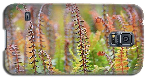 Blechnum Penna-marina Galaxy S5 Case