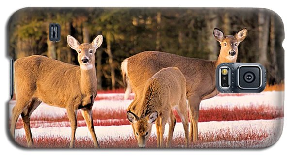 Galaxy S5 Case featuring the photograph Deer In Snow by Debbie Stahre