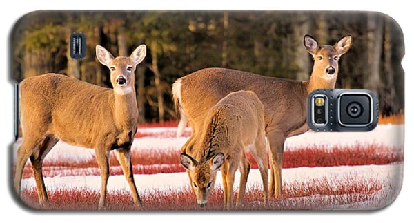 Deer In Snow Galaxy S5 Case by Debbie Stahre