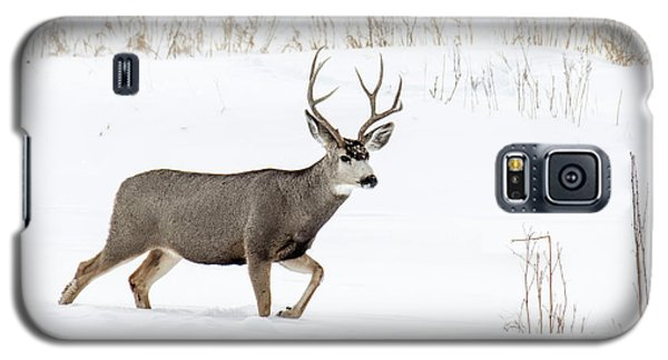 Galaxy S5 Case featuring the photograph Deer In The Snow by Rebecca Margraf