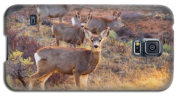 Galaxy S5 Case featuring the photograph Deer In The Sunlight by Darren White