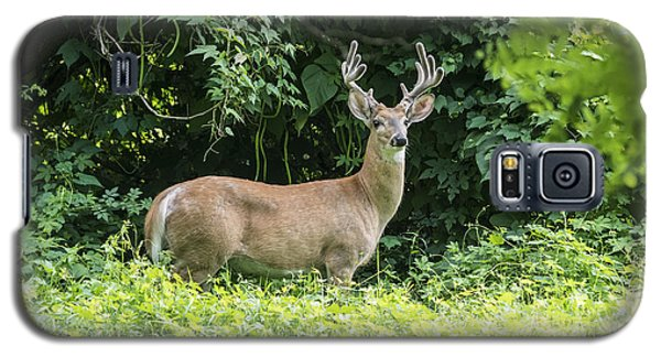 Eastern White Tail Deer Galaxy S5 Case