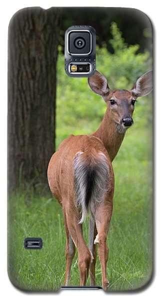 Deer Looking Back Galaxy S5 Case