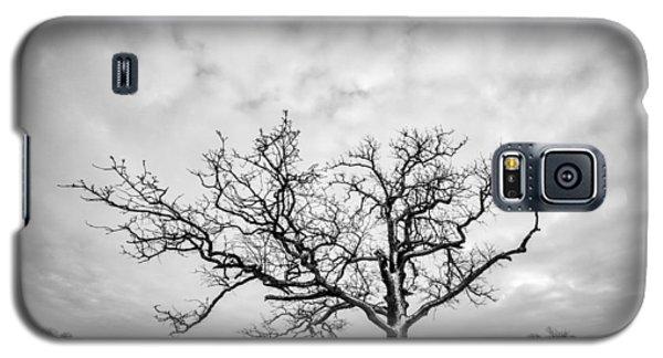 Galaxy S5 Case featuring the photograph Delaware Park Winter Oak by Chris Bordeleau