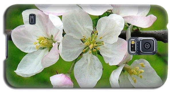 Delicate Apple Blossoms Galaxy S5 Case