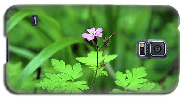 Galaxy S5 Case featuring the photograph Delicate Beauty by Ben Upham III