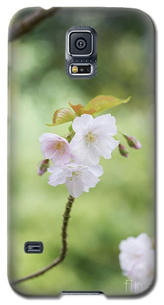 Galaxy S5 Case featuring the photograph Delicate Blossom by Tim Gainey