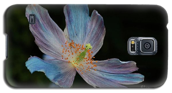 Delicate Blue Galaxy S5 Case