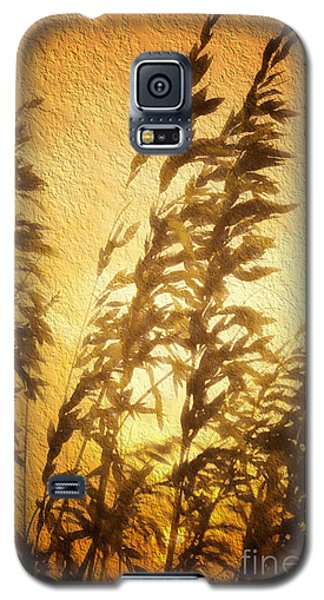 Galaxy S5 Case featuring the painting Delicate Dawn II by Dan Carmichael