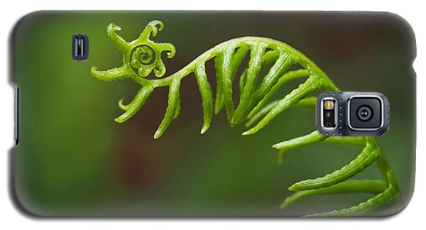 Delicate Fern Frond Spiral Galaxy S5 Case by Rona Black