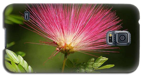 Delicate Pink Bloom Galaxy S5 Case by Gary Crockett