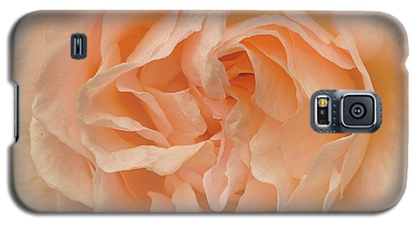 Delicate Rose Galaxy S5 Case by Jacqi Elmslie