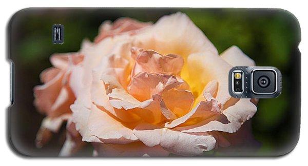 Delicate Rose Galaxy S5 Case