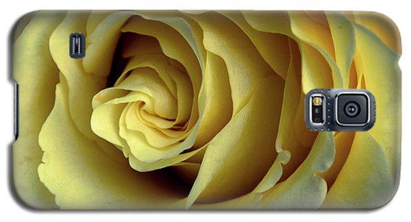 Delicate Rose Petals Galaxy S5 Case by Deborah Klubertanz