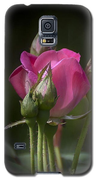 Delicate Rose With Buds Galaxy S5 Case