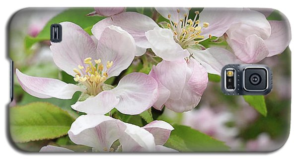 Delicate Soft Pink Apple Blossom Galaxy S5 Case by Gill Billington