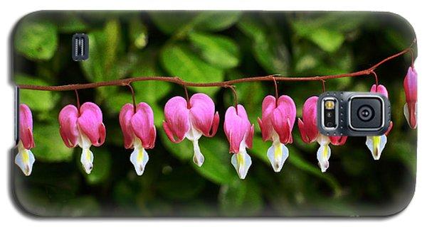 Delightful Bleeding Hearts Flowers Galaxy S5 Case by Maria Janicki