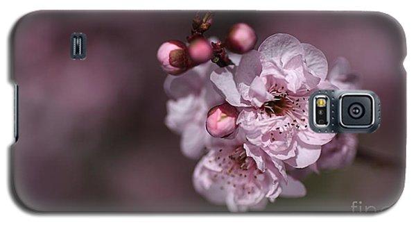 Delightful Pink Prunus Flowers Galaxy S5 Case