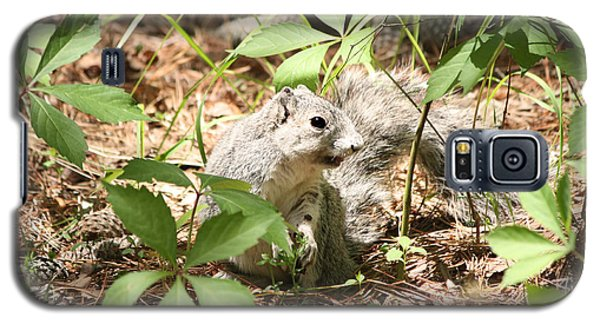 Delmarva Fox Squirrel - Local Rock Star Galaxy S5 Case