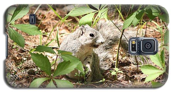 Delmarva Fox Squirrel - Local Rock Star Galaxy S5 Case