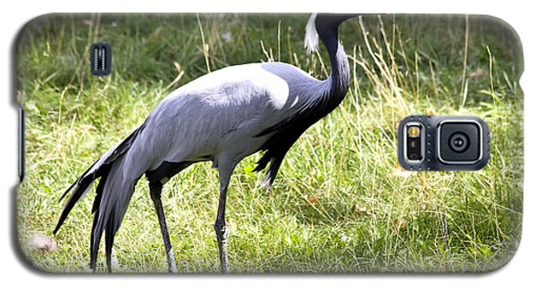Galaxy S5 Case featuring the photograph Demoiselle Crane by Teresa Zieba