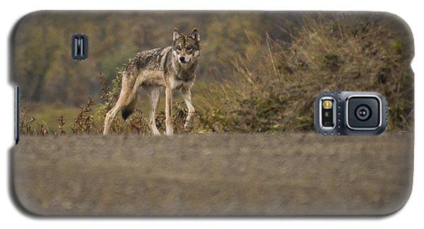 Denali Park Wolf Galaxy S5 Case