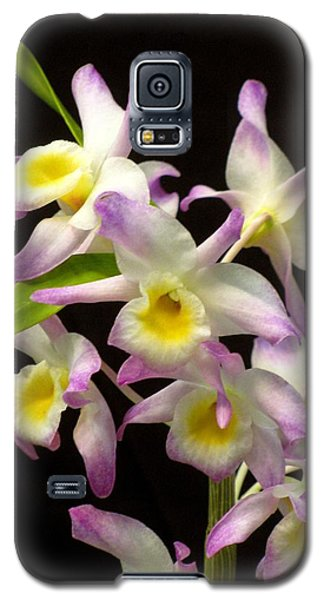Galaxy S5 Case featuring the photograph Dendrobium Orchid by Alfred Ng