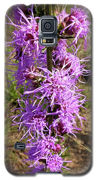 Galaxy S5 Case featuring the photograph Dense Blazing Star by Scott Kingery