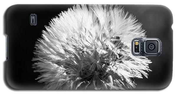 Dente Di Leone - Tarassaco Galaxy S5 Case